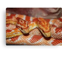 Beauty in Scales Canvas Print