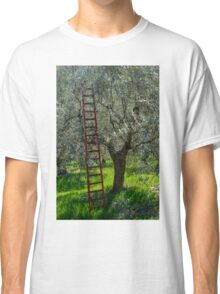 Red Ladder, olive pruning, Acquedotto Romano, Spello, Umbria, Italy Classic T-Shirt