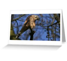 The Kestrel - None Captive Greeting Card
