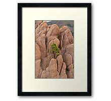 Tree and Geology Framed Print