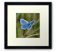 Blue ? Framed Print