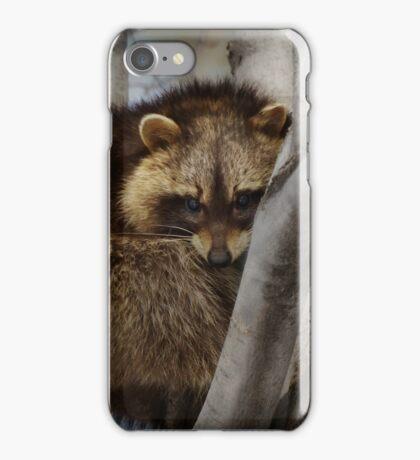 Raccoon in Tree iPhone Case/Skin