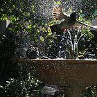 Captured - Pigeon flees birdbath by PetraJW