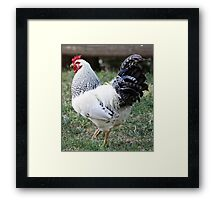 The Rooster King Framed Print