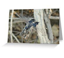 Dragonfly ~ Black Saddlebags (Male) Greeting Card