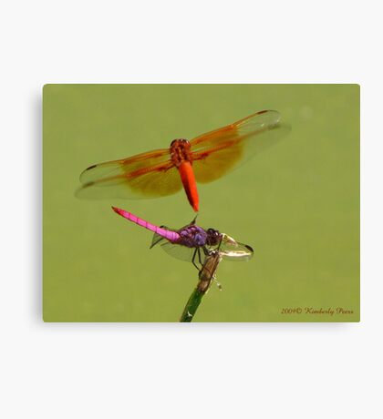 Dragonflies ~ Roseate Skimmer & Flame Skimmer Canvas Print