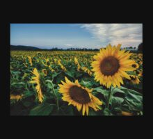 Brighten your day with Sunflowers! by Tojy George
