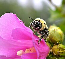 Busy As A Bee by Jeannie Chiara