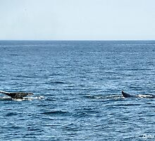 Whale Watch by Lyana Votey