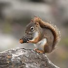 Red Squirrel - Which End Tastes Better? by Stephen Stephen