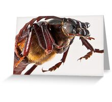 Da Bug Greeting Card
