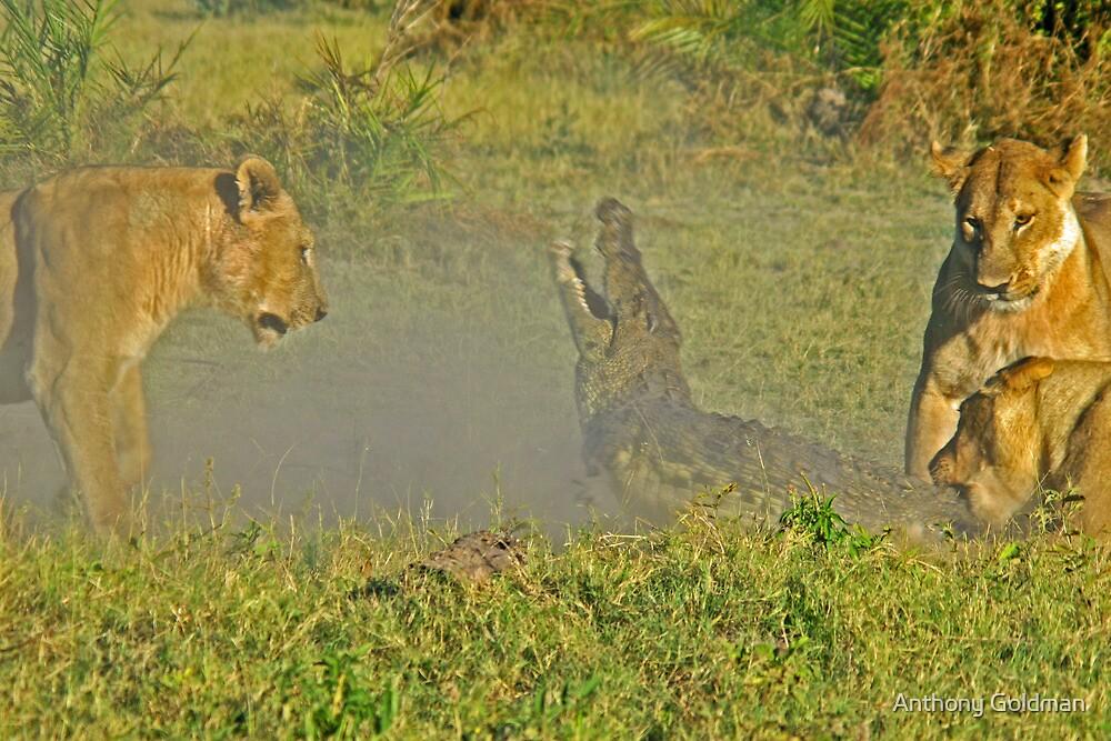 Lion -crocodile interaction 3 by jozi1