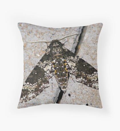 Rustic Sphinx Moth  Throw Pillow