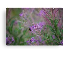Bumble Bee on pink Flowers Canvas Print
