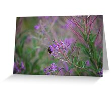 Bumble Bee on pink Flowers Greeting Card