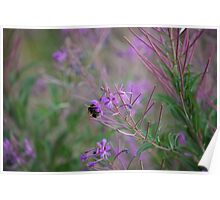 Bumble Bee on pink Flowers Poster
