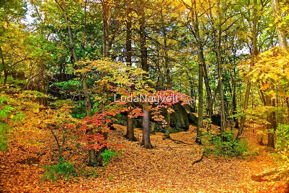 Wooded reservation by LudaNayvelt