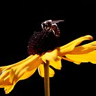 Bee by Mike Stone