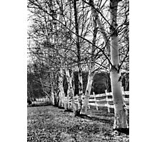 Property Line Photographic Print