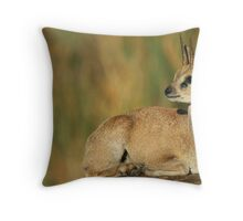 Klipspringer Buck Throw Pillow