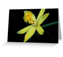 Bulbine vagans Greeting Card