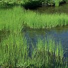 Picture Lake, Marshgrass by Gene Ritchhart