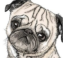 Cute Pug Drawing in Colour by naomismith