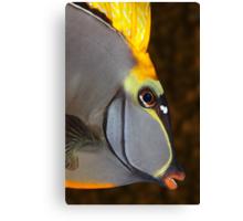 Design Fish Canvas Print