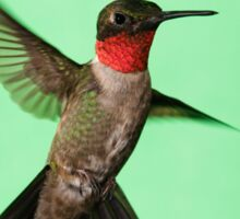 Ruby Throated Hummingbird Sticker