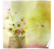 Sun Kissed Daisies Poster