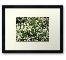 Large field overgrown with small white daisy flower Framed Print