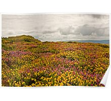 Heather and Gorse Poster