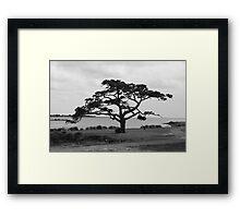 Tree in Monochrome Framed Print