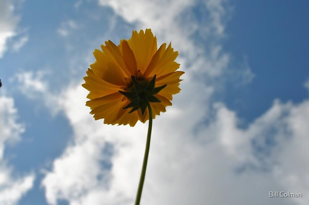 Little Flower- Big World by Bill Colman