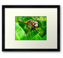 Say cheese! ~ What? Framed Print