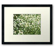 Large field overgrown with small white daisy flowers closeup Framed Print