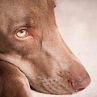 A Dog's Life by Steven Johnson