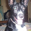 KOSMO our beautiful dog is missing by catherine walker