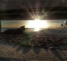 Cat on the Pier by Michelle Clarke