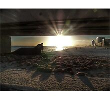 Cat on the Pier Photographic Print
