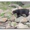 Asian black bear by foppe47