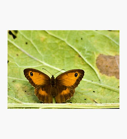 Gatekeeper Butterfly Photographic Print