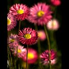 Splash of Pink... by GerryMac