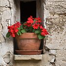 Provence Flower Pot by Donna Eaton