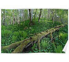 Nature Reserve Poster