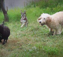 Chase 2 by SamTheCowdog
