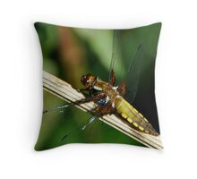 Broad-bodied chaser female Throw Pillow