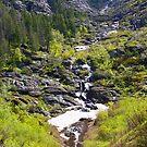 Spring runoff   by Borror
