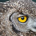 Owl Eye Contact by Cheryl Westerdale