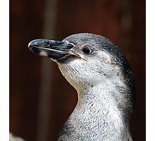 p.p.p.p.p.p.p pick up a penguin Photographic Print